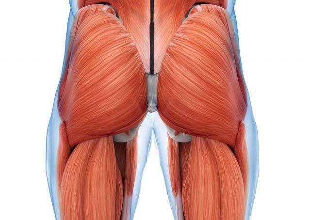 ヒップリフトで鍛えられる筋肉