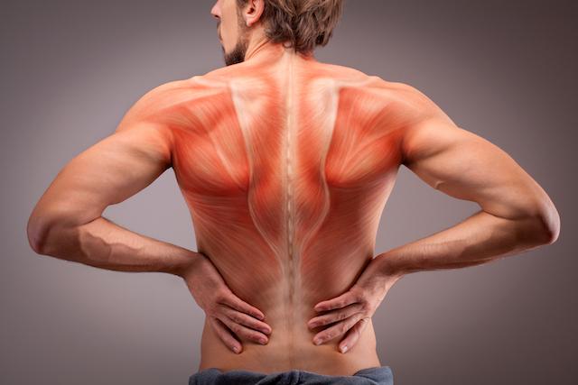 下半身や体幹など体の中でも大きい筋肉を鍛える
