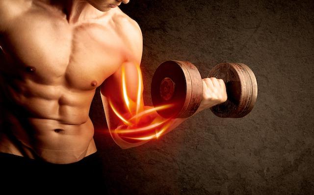 筋肥大のメカニズムは摂取カロリーがポイント