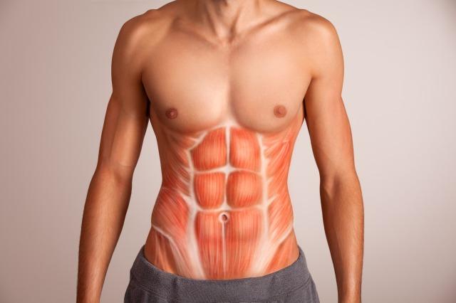 腹筋ローラーで鍛えられる筋肉