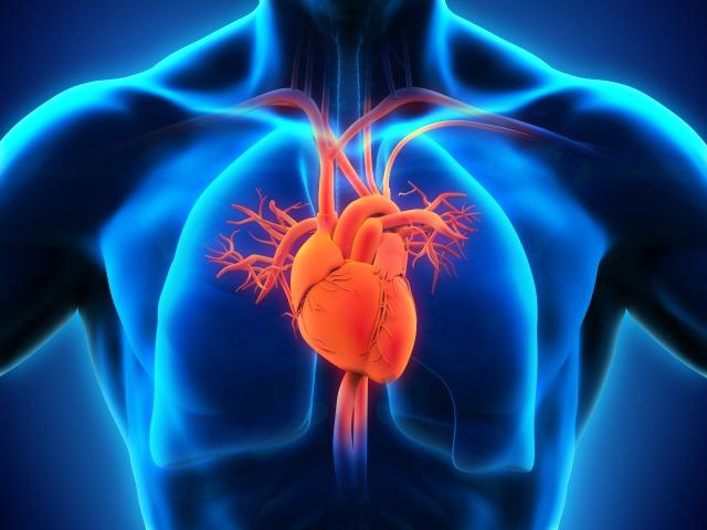 心肺機能の向上