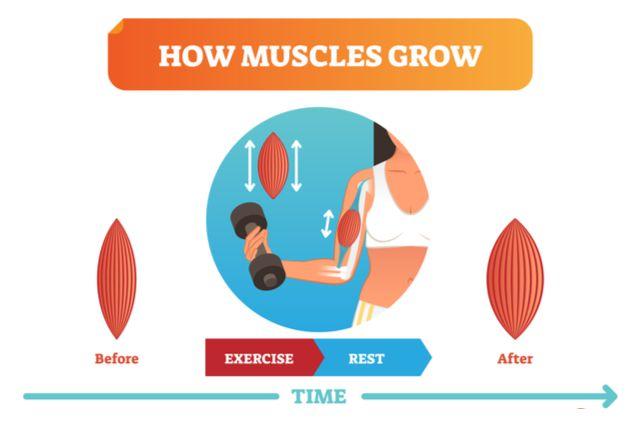 筋肉がつくペースを知る