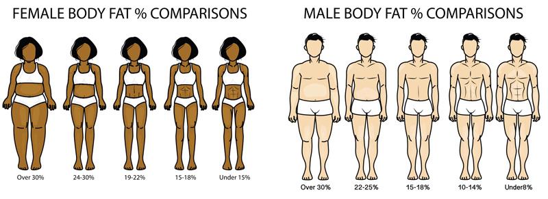 腹筋の縦線が見える体脂肪率の目安