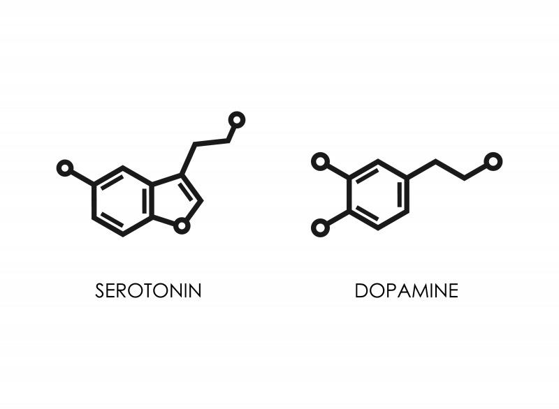 3. セロトニンやドーパミンの分泌が増える