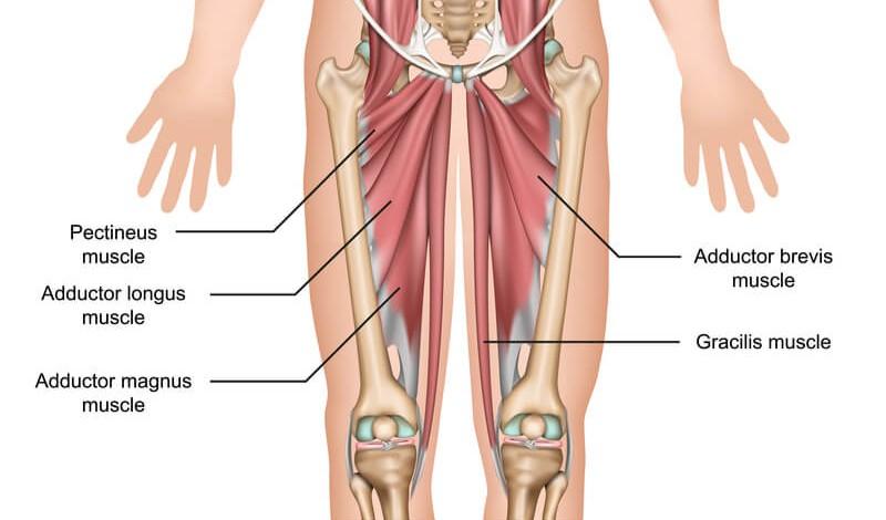 内転筋は脚と骨盤をつなぐ重要な筋肉