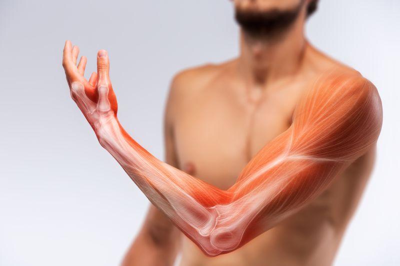 細マッチョになるために鍛えるべき腕周りの筋肉部位